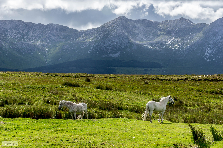 Walk near lough Innagh - Connemara horses