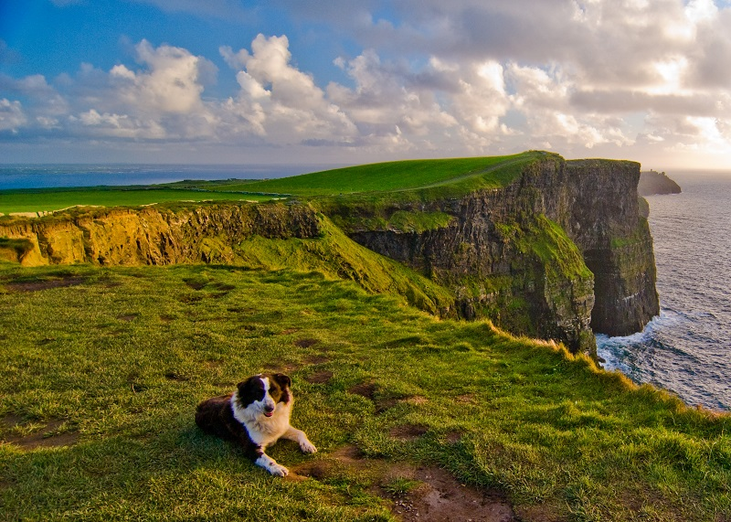 Sheep dog at the Cliffs of Moher, Ireland with Brendan Vacations
